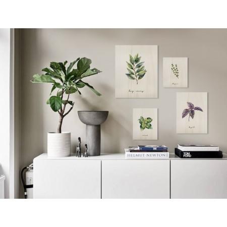 Pack de cuadros Plants